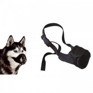 אביזרים לכלבים