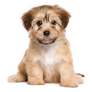 גורים לכלבים