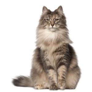 סניור לחתולים