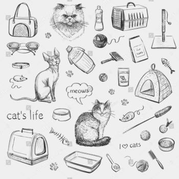 אביזרים לחתולים